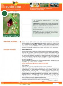 auximore_fiche